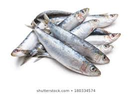 Image result for picture of sardines